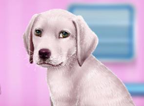 Labrador İyileştirme