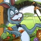 Tavşan Macera